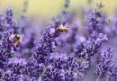 Miel Martine : le premier miel français certifié par un organisme indépendant