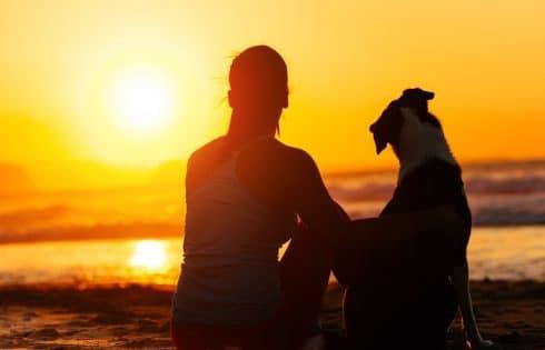 Reglo : les croquettes écologiques et saines pour chiens à base d'insectes